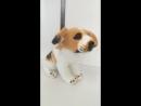 Мягкая игрушка собака Бигль музыкальный