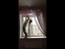Я рисковала но смогла это сделать на окне