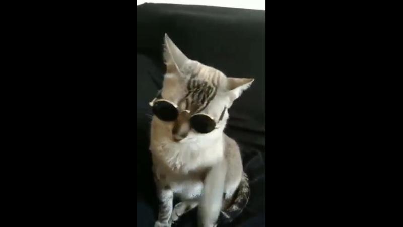 Ты можешь быть крутым, но крутости этого кота тебе не переплюнуть
