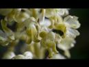 Terra Mater: Тёмная сторона растений - Орхидеи / Гениальные соблазны / Секс и обман (2013) HD 720