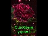 VID-20170508-WA0006.mp4