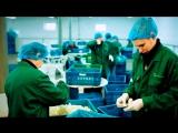 Работа в Польше Сортировка Овощей и Фруктов