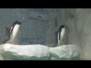 Пингвины из Мадагаскара 🐧😅