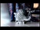 Реклама Whiskas для котят (2007-2009)