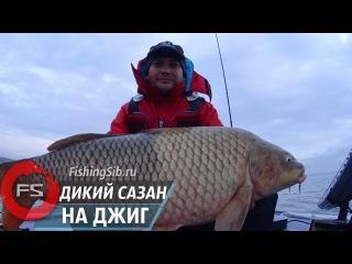 Ловля огромных... гигантских сазанов с лодки на джиг  FishingSib видео
