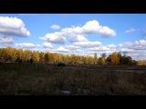 Баварские скакуны на поляне в ясный день