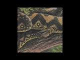 Rainforest Spiritual Enslavement - Ambient Black Magic HOS-498