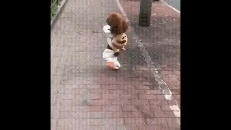 бежит собака 🐶🐩🐕мохноногая