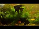донецк аква, обзор моей разводни, как и где я развожу аквариумных рыбок