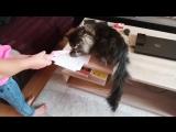 Маша просит завести котика, а я пока отказываю ✅ #воловичева