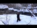 Красная панда радуется первому снегу!
