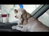 Смешные видео с животными под хорошую музыку