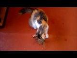 Корень валерианы и кошки