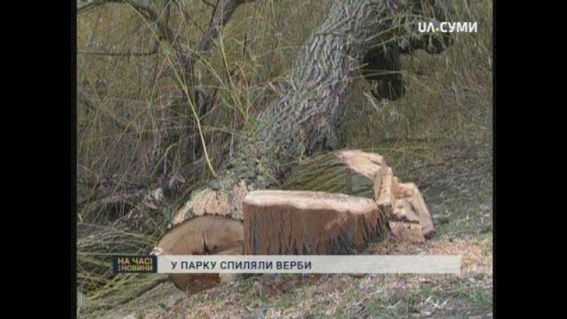 У Сумському парку «Казка» спиляли 10 верб