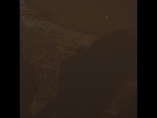 eddy_b0y video