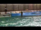 Дельфинарий на Крестовском острове.