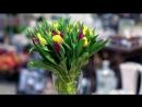 Букет из жёлтых и фиолетовых тюльпанов