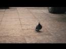 Голубь,голубь голубокКомпрессорный ЗИЛ130