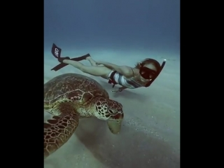spearfish.and.freedive.world_video_1519385361418.mp4