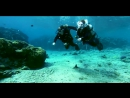 Scuba diving at Red Sea in Eilat Israel Ahla Diving Center Скуба Дайвинг на Красном Море в Эйлате Израиль