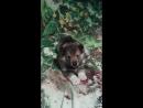 Мой любимый пёсик Ярик Его мама Зинка подарила мне его к Новому Году Собаки будет мне верным помощником в моих походах