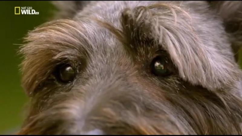 Д Ф Насколько умна ваша собака 2 серия 2014г