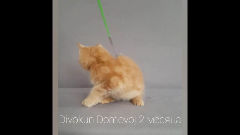 ДивоКун Домовой 2 месяца.mp4
