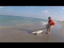 Спасение акулы
