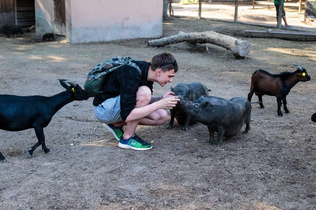 Трахают собчак коз свиней и других