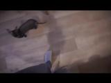 vlog - остеопат - танцы в примерочной - боюсь высоты - вкусняшки в кафе