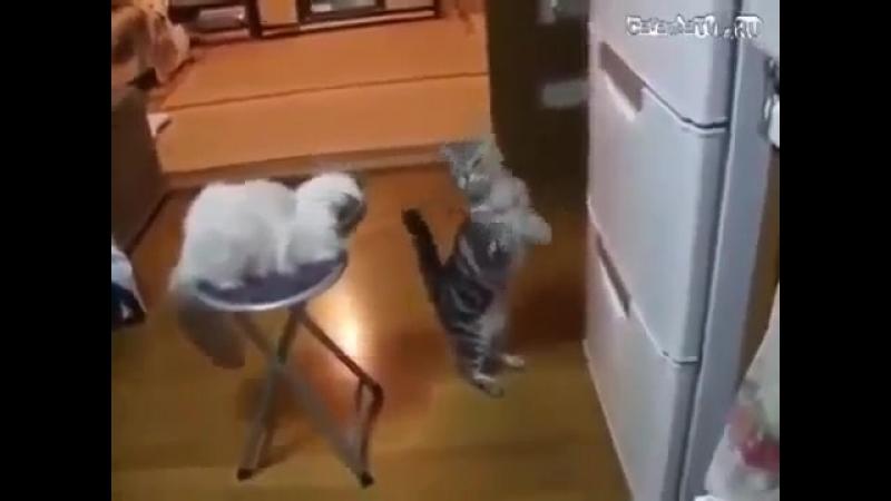 - О, холодильник, ты могуч...ты хранишь сосисок туч... Аль откажешь нам в ответе... по сосисочке одной...