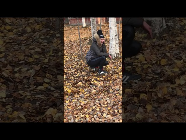 В мире животных на улице Дзержинского. В поисках закладки