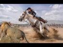 خيول مدربة مدهشة ! المعنى الحقيقي لمتعة ال159