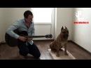 Собака с абсолютным слухом Соседи кайфуют Рыбачёв и Пёс