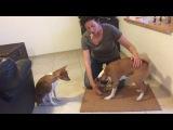 Физкультура для здоровых собак. Упражнение 8