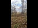 Теремок в лесу