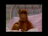 Alf Quote Season 2  Episode  22_Печенье