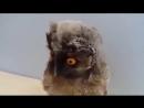 Совушка- обояшка