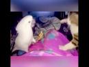 Смешные моменты драк животных