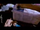 Распаковка Декстера и крысиного хвоста
