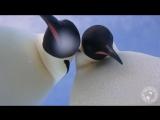 Penguin selfie offers bird's eye view