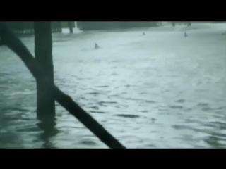 Акулы на улицах Майами во время урагана Ирма @VipLabuda