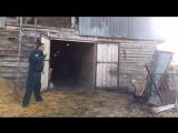 цыганские лошади