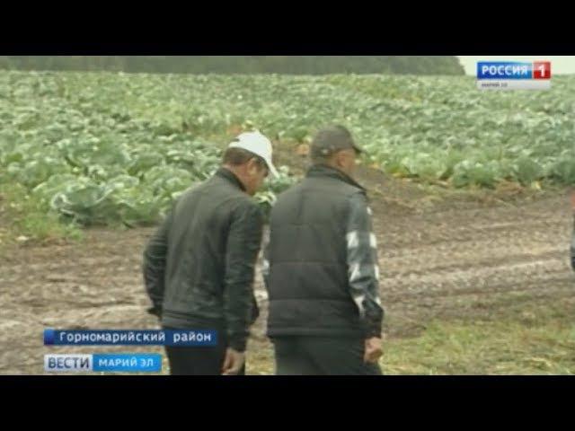 Горномарийские фермеры: «Чтобы быть конкурентоспособным, нужно объединяться»