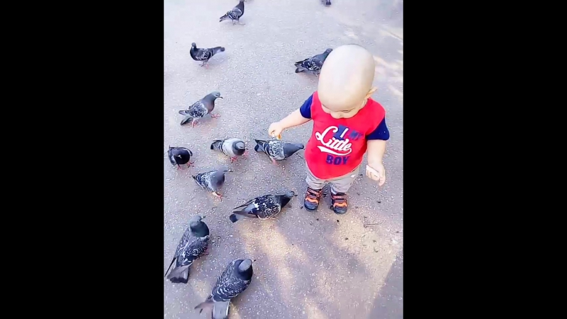 Ох уж эти голуби 😂😂😂