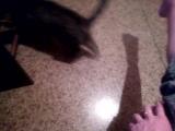 делу - время, потехе - кот