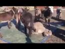 Некоторым людям должно быть стыдно.И зря про некоторых говорят-осел!Тем самым оскорбляя СОСТРАДАТЕЛЬНОЕ животное...