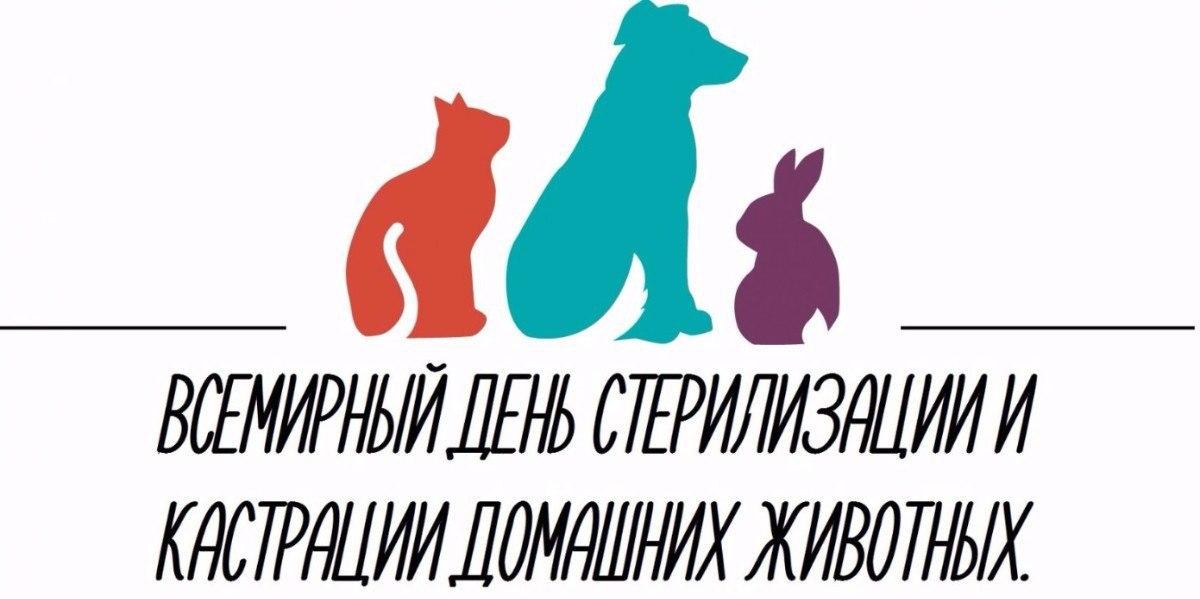 Донские ветеринары во Всемирный день стерилизации по льготной цене прооперировали 37 животных