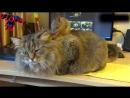 Видео 1112 Белки Прикольные Животные Угарный Прикол Про Белок