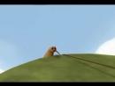 Мечта птички Kiwi-2.mp4